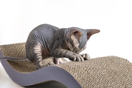 ダンボールに爪を研ぐ猫