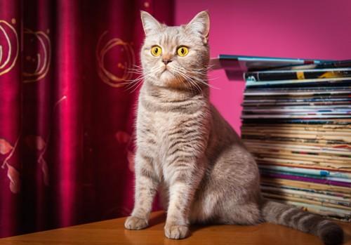 猫とうしろにある雑誌