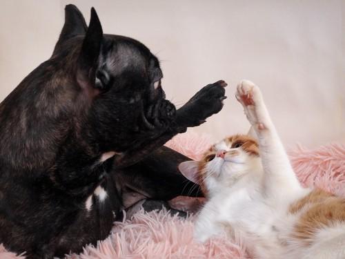 前足を合わせようとしている犬と猫