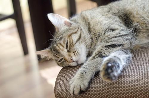 ソファでだらける猫