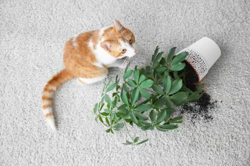 花瓶を倒す猫