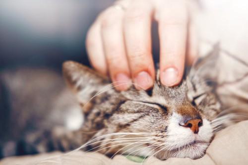 人に懐いている猫