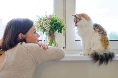 飼い主を見つめる猫