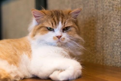不機嫌そうな顔で壁に向かう猫