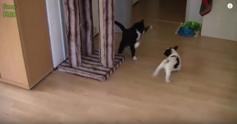 遊ぶ猫と犬1
