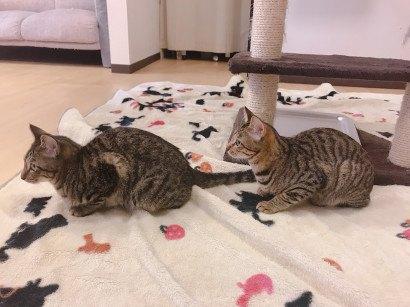 ルナ&ニナ