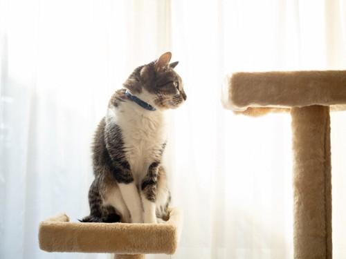 キャットタワーでお座りする猫