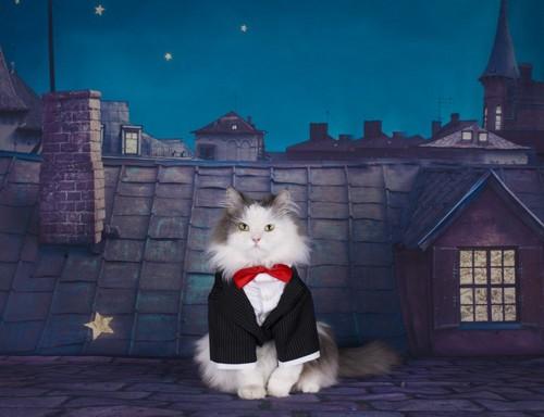 黒のスーツに赤い蝶ネクタイの猫