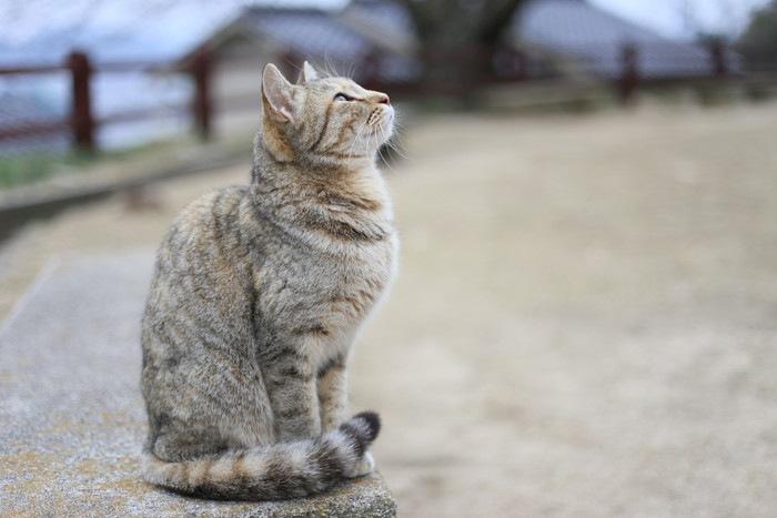 巻き座りする猫の写真