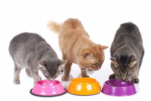 それぞれの食器で食事をする三匹の猫