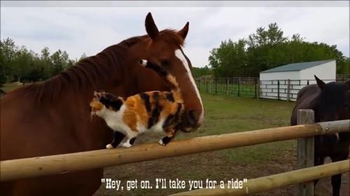 馬にお尻を押される猫
