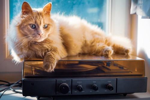 レコードプレーヤーの上の猫