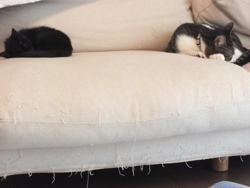ソファーで離れて寝る二匹