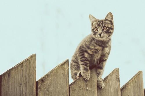 柵の外に出たがっている猫
