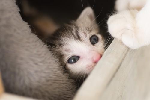ゴロゴロ鳴く猫