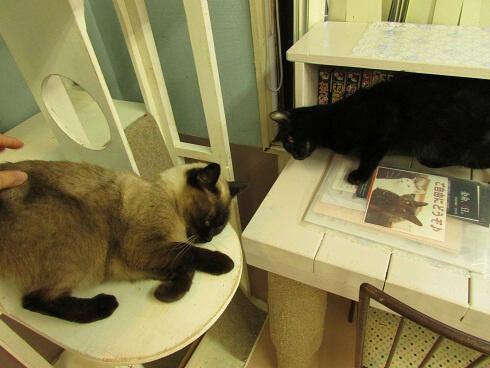 くつろぐニャイダーハウスの猫たち