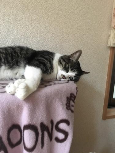 半目をあけて眠る猫