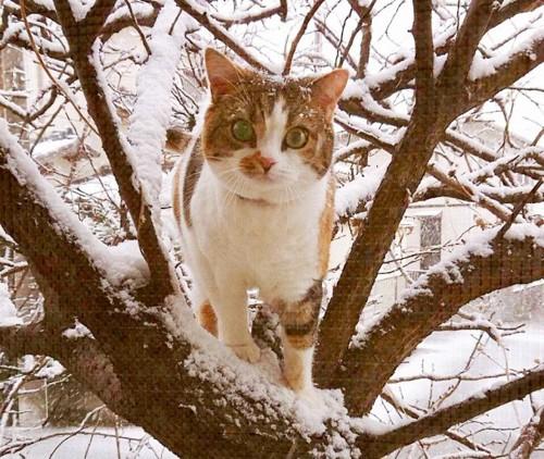 雪の中、木登りしている猫