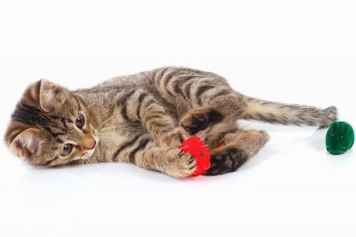 おもちゃをケリケリして遊ぶ子猫