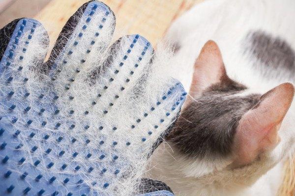 手袋型のラバーブラシと猫