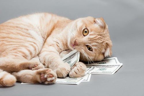 お金を抱える猫