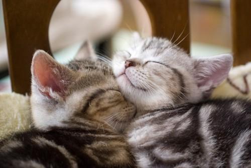 お昼寝する子猫たち