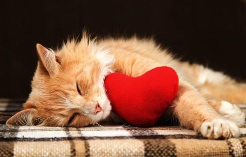 赤が好きな猫イメージ