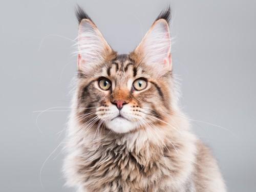 耳をピンとたてた猫