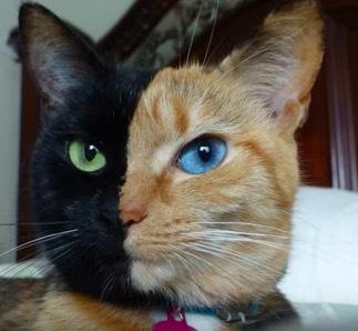 珍しい柄猫7