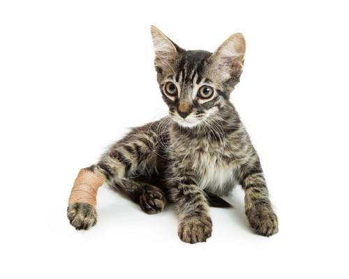 後ろ足を怪我した猫