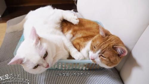 カゴの中にいる2匹の猫