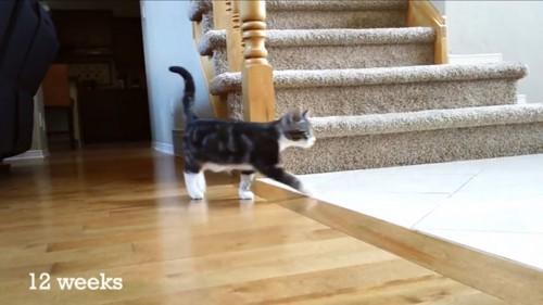 12周目の猫