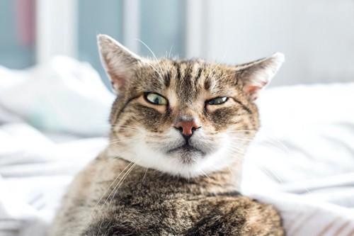 ベッドの上で目を細めている猫