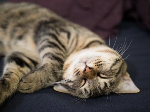 幸せな寝顔の猫