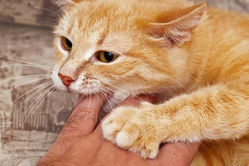 人の手を噛む茶トラ猫