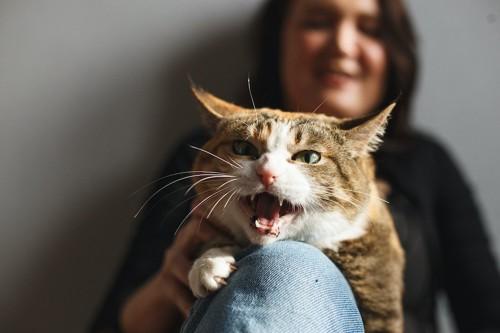 女性の膝の上で鳴いている猫