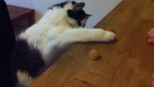 ボールを選ぶ猫