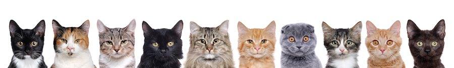 様々な毛色の猫たち