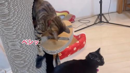 黒猫のしっぽにタッチする猫