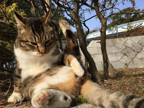 セクシーに座る猫
