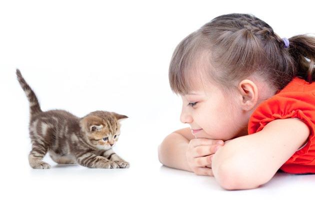 女の子と遊んでいる猫