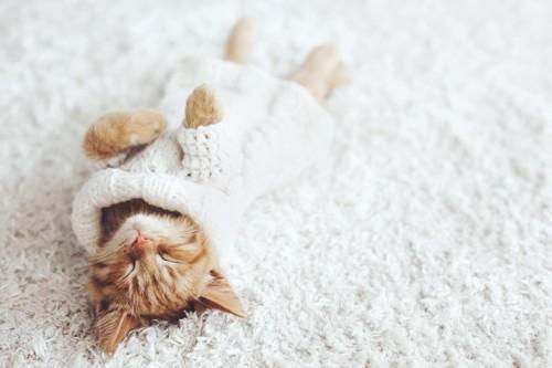 セーターを着る子猫