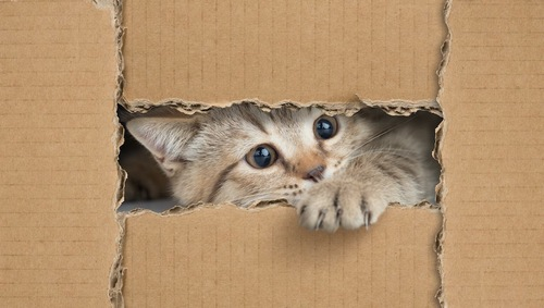 ダンボールの隙間から手を出す猫