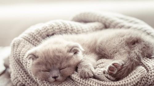 毛布上の子猫