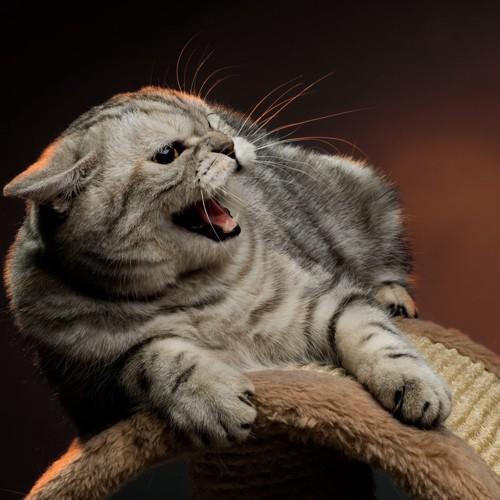 ベッドで唸る猫