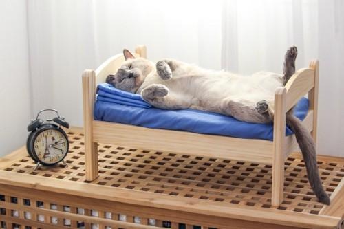 木のベッドに眠る猫
