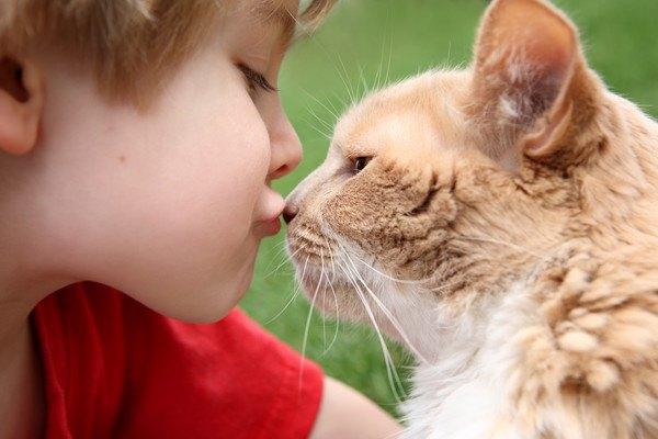 鼻にキスをされる猫
