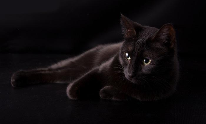 背景と同化する黒い猫