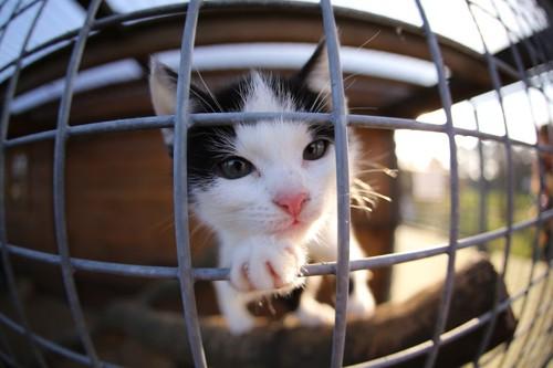 ケージの中の:猫
