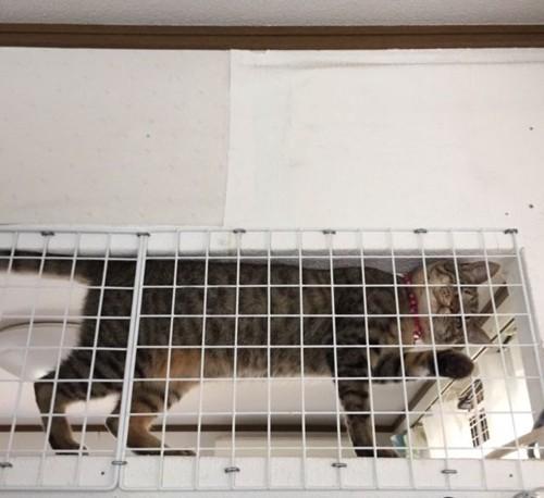 猫がワイヤーネットに手を入れている